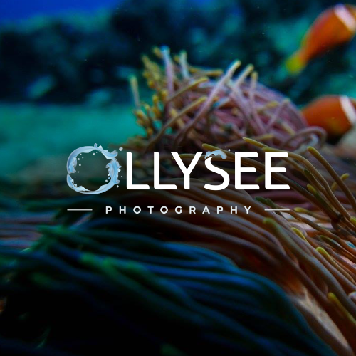 Ollysee logo project min